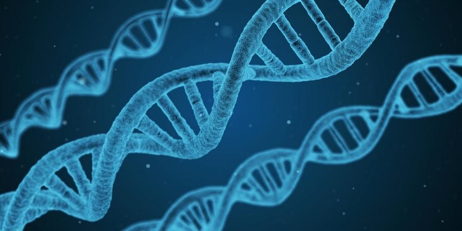 NEOBONA, tecnología de última generación para detertar anomalías en el feto